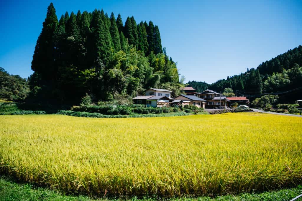Rizières à Kumamoto, Kyushu