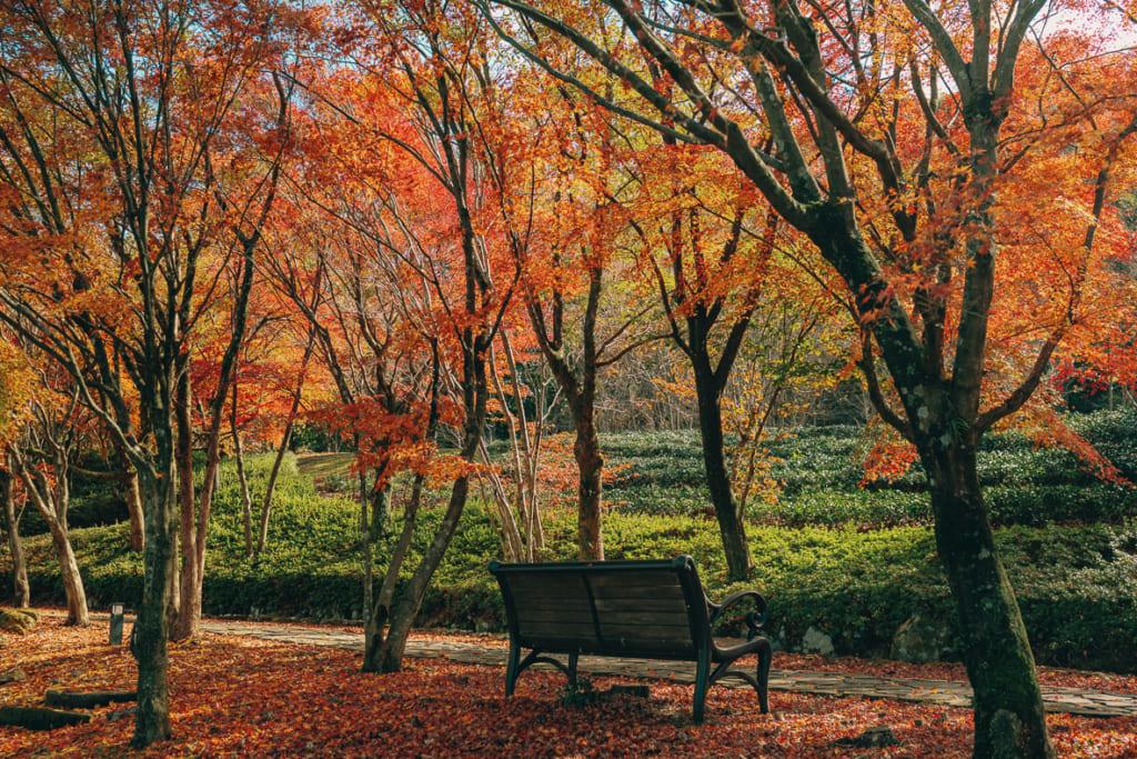 Les couleurs de l'automne japonais dans les montagnes de Yame