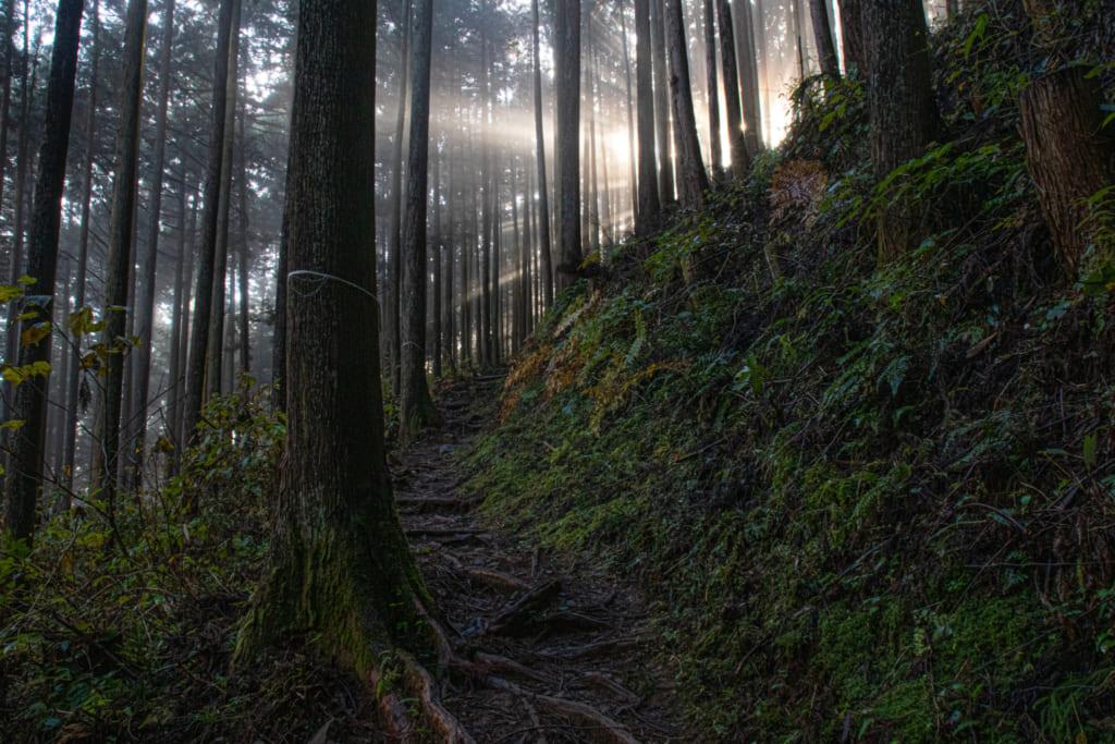 Lumière filtrant à travers les arbres lors d'une matinée brumeuse au Mont Mitake