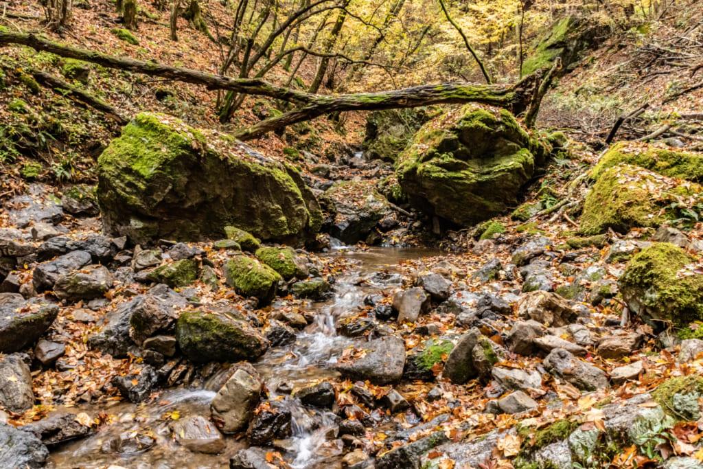 Petit ruisseau dans le Rock Garden