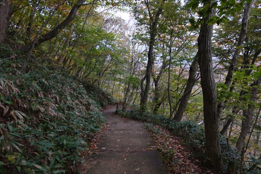 Chemin de randonnée entourré d'arbres