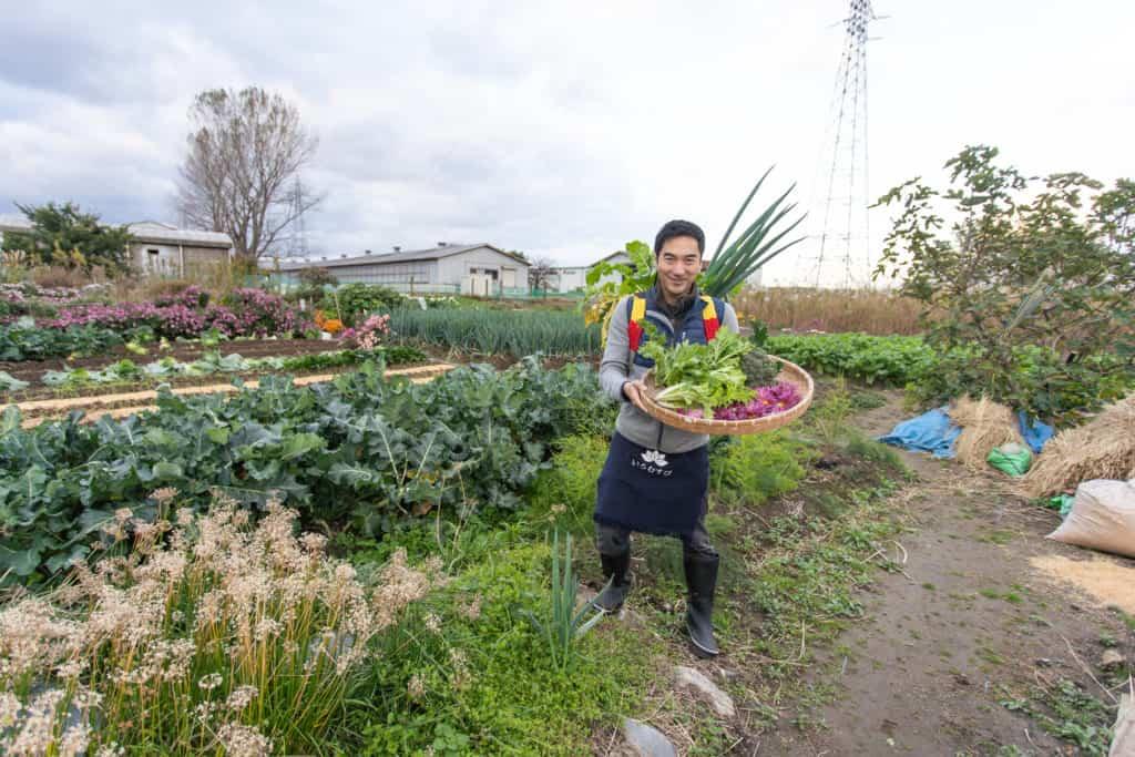 cueillette de légumes dans les chambs proche de l'auberge
