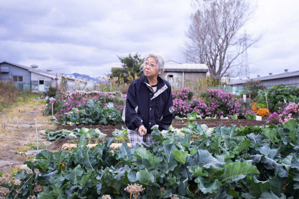Une fermière de Murakami nous expliquant comment ramasser les légumes
