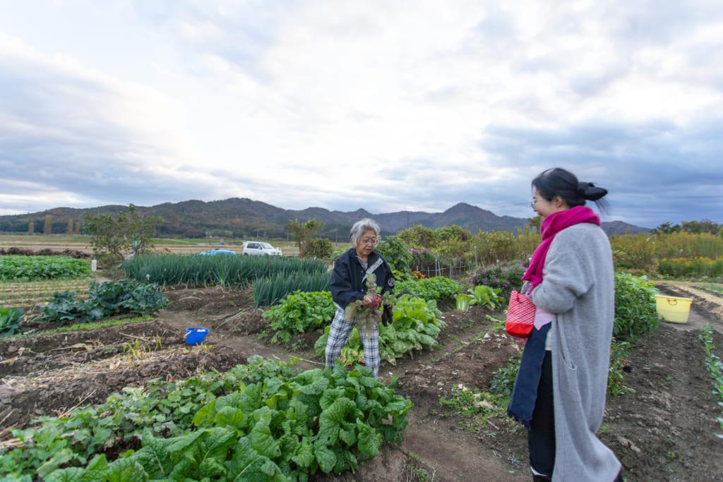 Champ de légumes d'une ferme proche de l'auberge
