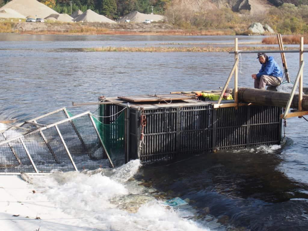 Des cages qui sont utilisées pour attraper les saumons de Murakami