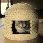 Les maisons à chats traditionnelles de Sekikawa