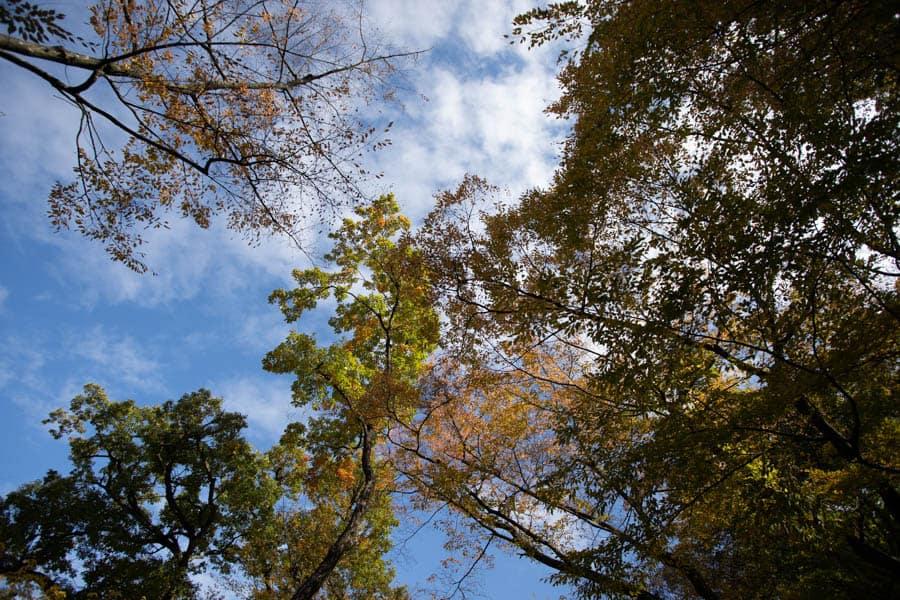 Les arbres qui commencent à se teinter des couleurs de l'automne