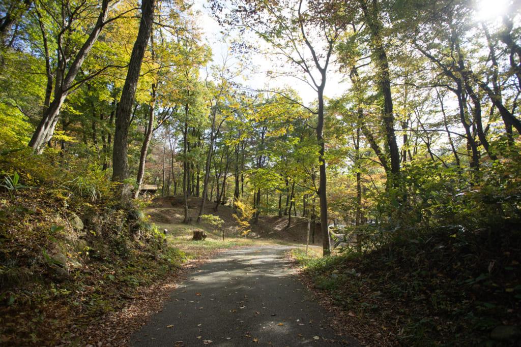 Chemin passant à travers bois aux alentours de Sekikawa