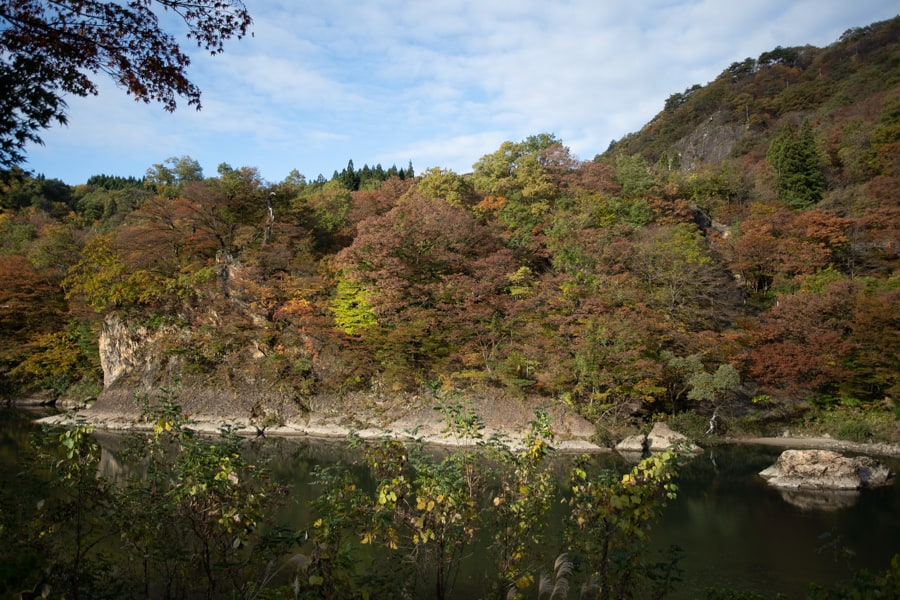 Vue sur la rivière et les forêts