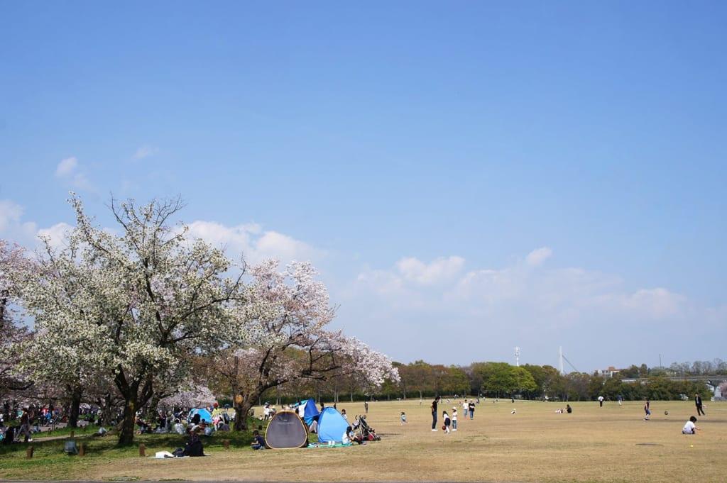 Familles fêtant la floraison des cerisiers au Parc de l'Exposision universelle d'Osaka