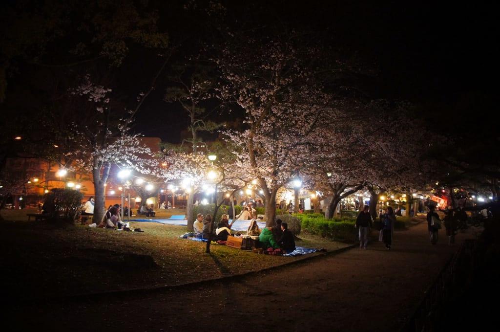 Fête sous les cerisiers la nuit à Dogo Onsen