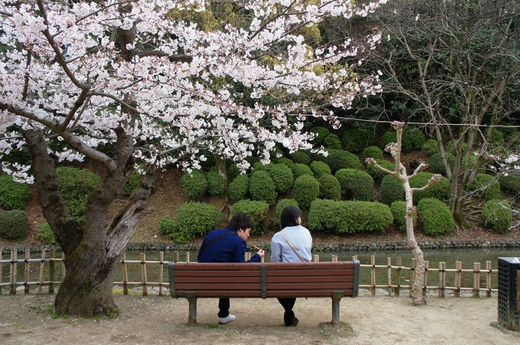 Couple pique-niquant sous les sakura à Dogo Onsen, Shikoku