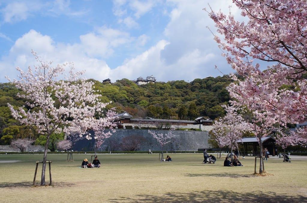 Pique-nique sous les cerisiers en fleurs devant le château de Matsuyama Japon