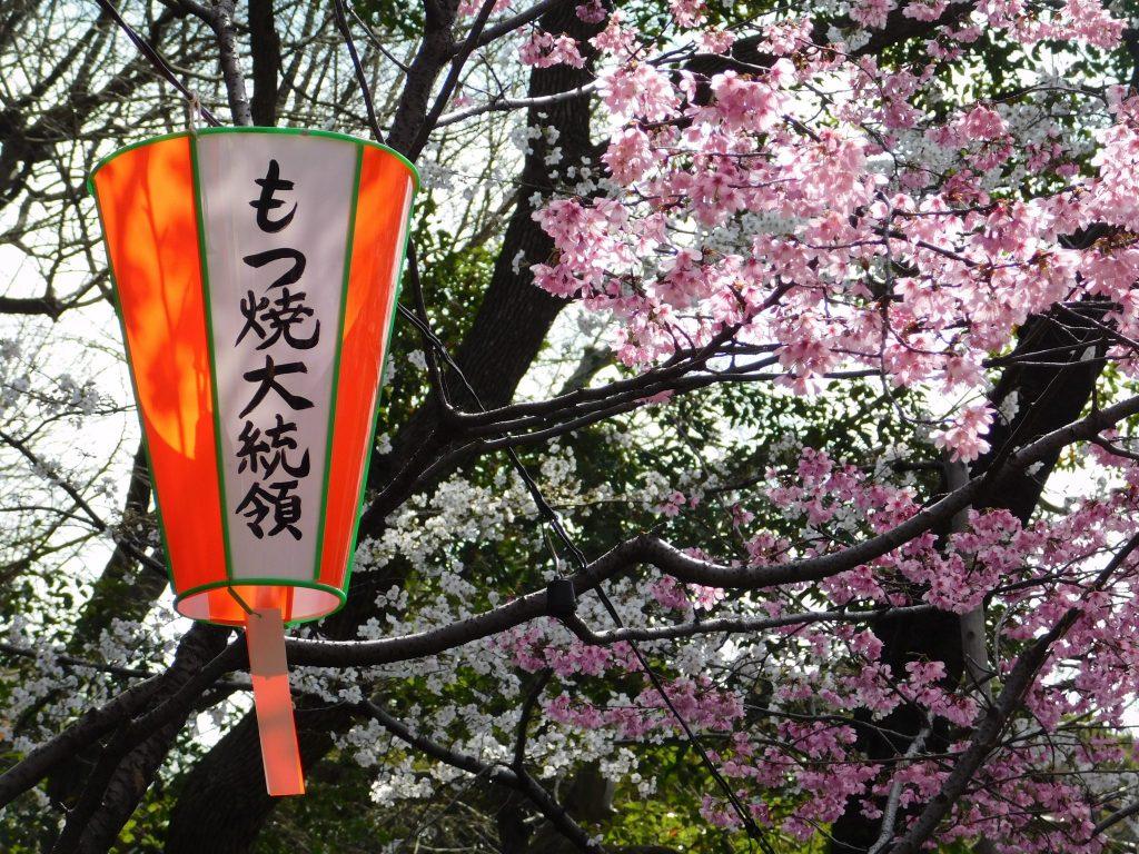 Lanterne dans un cerisier en fleurs à Tokyo