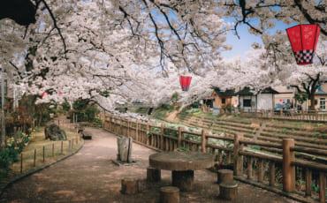 Lieu calme sous les cerisiers de Toyama
