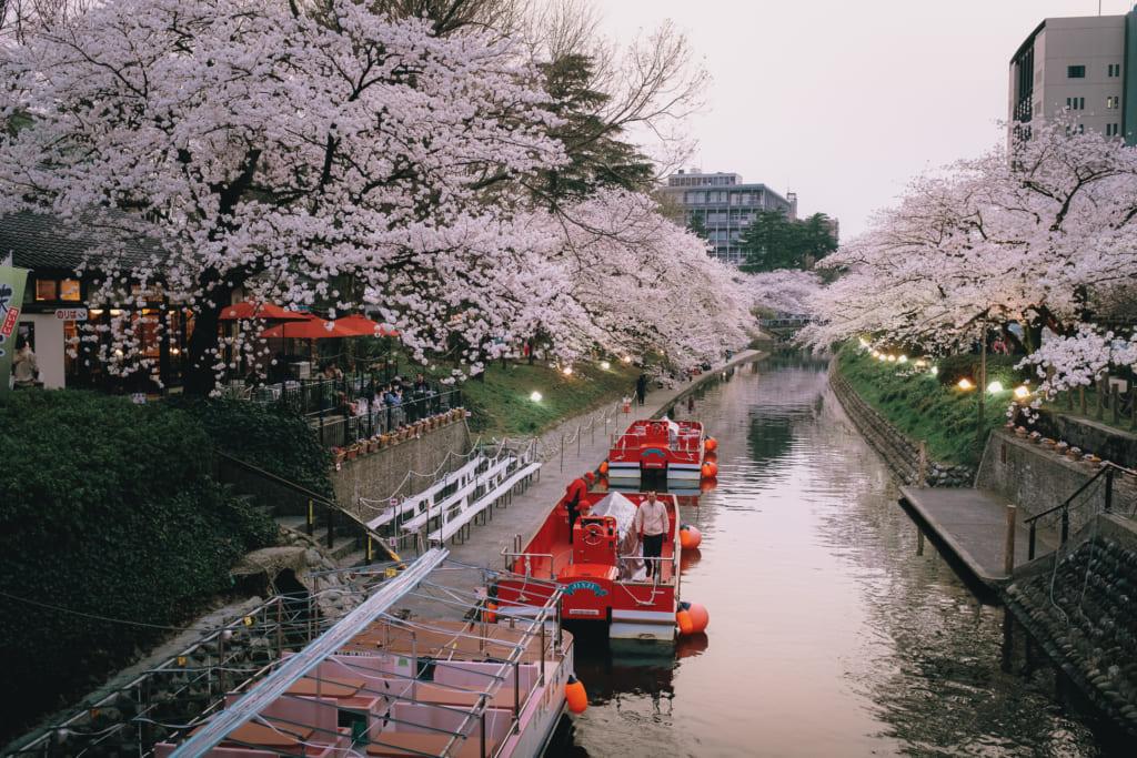 les cerisiers en fleur aux abords de matsukawa river à Toyama