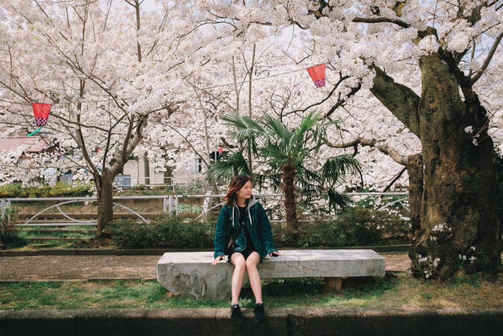 un banc au calme sous les cerisiers de Toyama