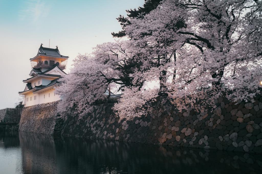 les cersiers en fleur aux abord du chateau de toyama