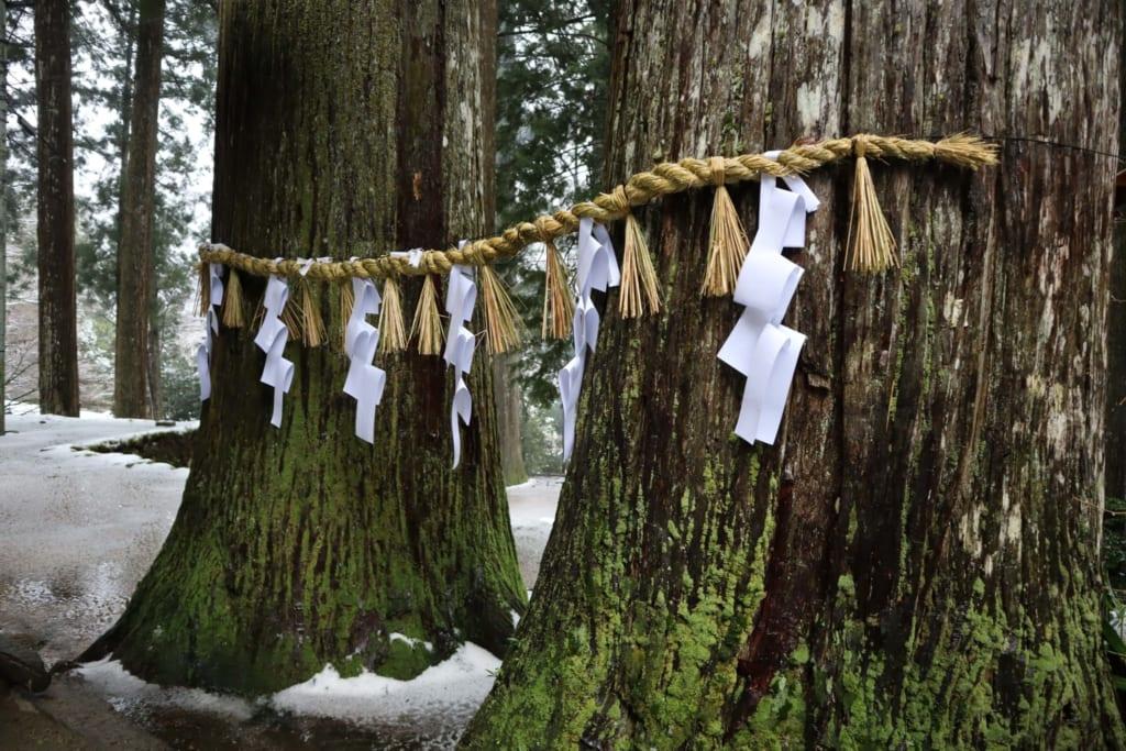 arbres de la montagne sacrée mitoku, à tottori