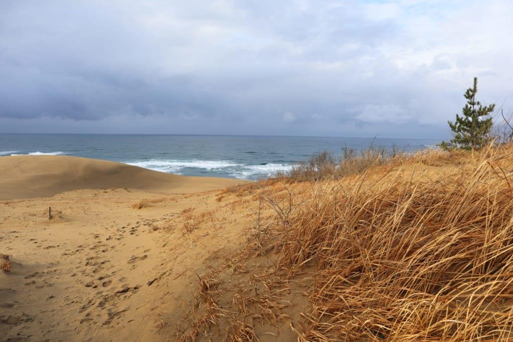 Mer et désert dans les dunes de tottori