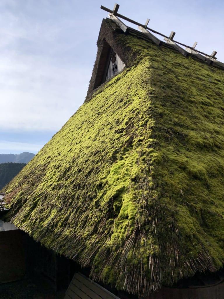 De la mousse recouvre les toits de chaume des maisons de kayabuki no sato
