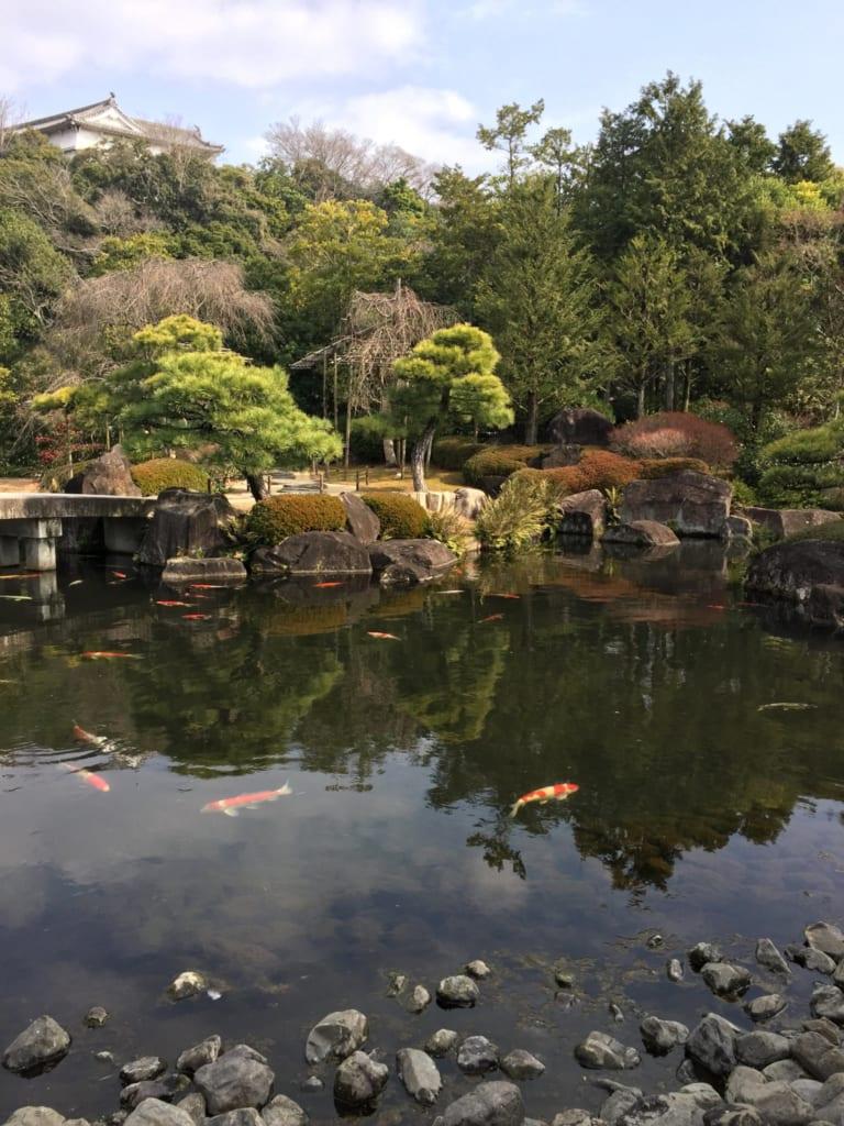 Bassin plein de carpes koï dans le parc qui entoure le châteeau de Himeji