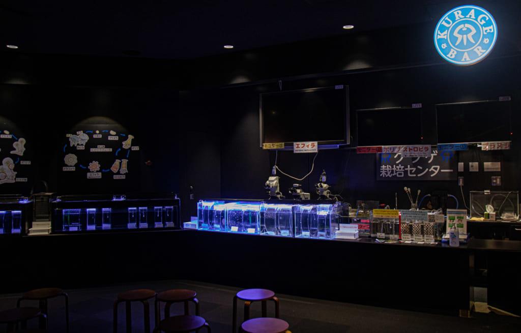 Bar à meduse, Kamo aquarium Tsuruoka