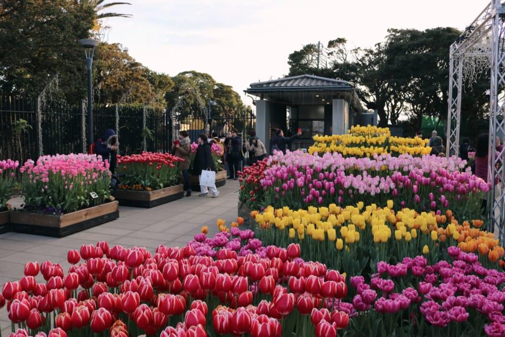 les tulipes du jardin samuel cocking à Enoshima