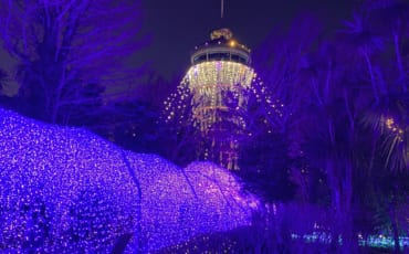 des illuminations de partout durant le shonan no hoseki