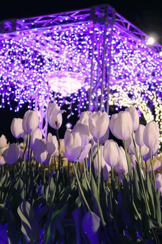 des tulipes blanches sous les milliers de leds des illuminations du shonan no hoseki