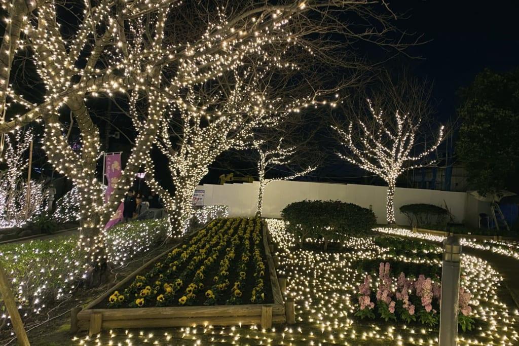 même en dehors du jardin samuel cocking les arbres sont illuminés