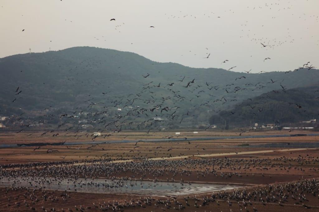 Un paysage magique grace à des centaines d'oiseaux