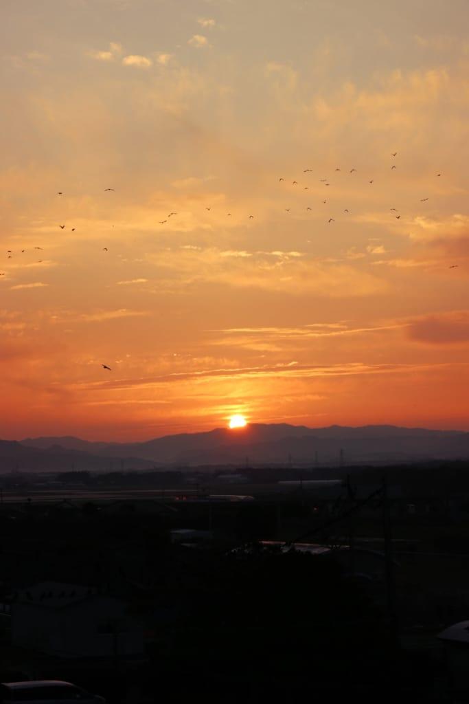 Des oiseaux dans le ciel au lever du soleil