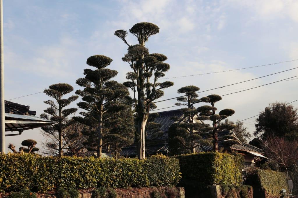 d'autres arbres izumi inumaki