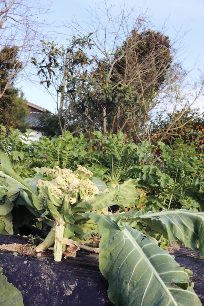 Les choix du potager de cette auberge où passer un agréable séjour à la ferme