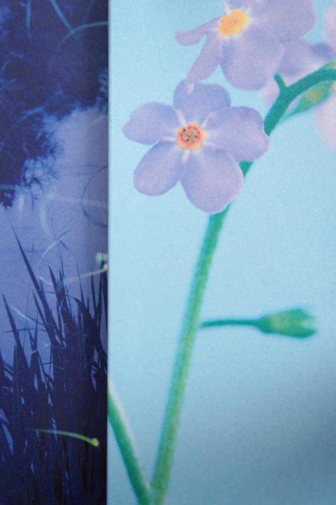 Détails de la couverture de deux livres d'Aki Shimazaki : Wasurenagusa et Hotaru