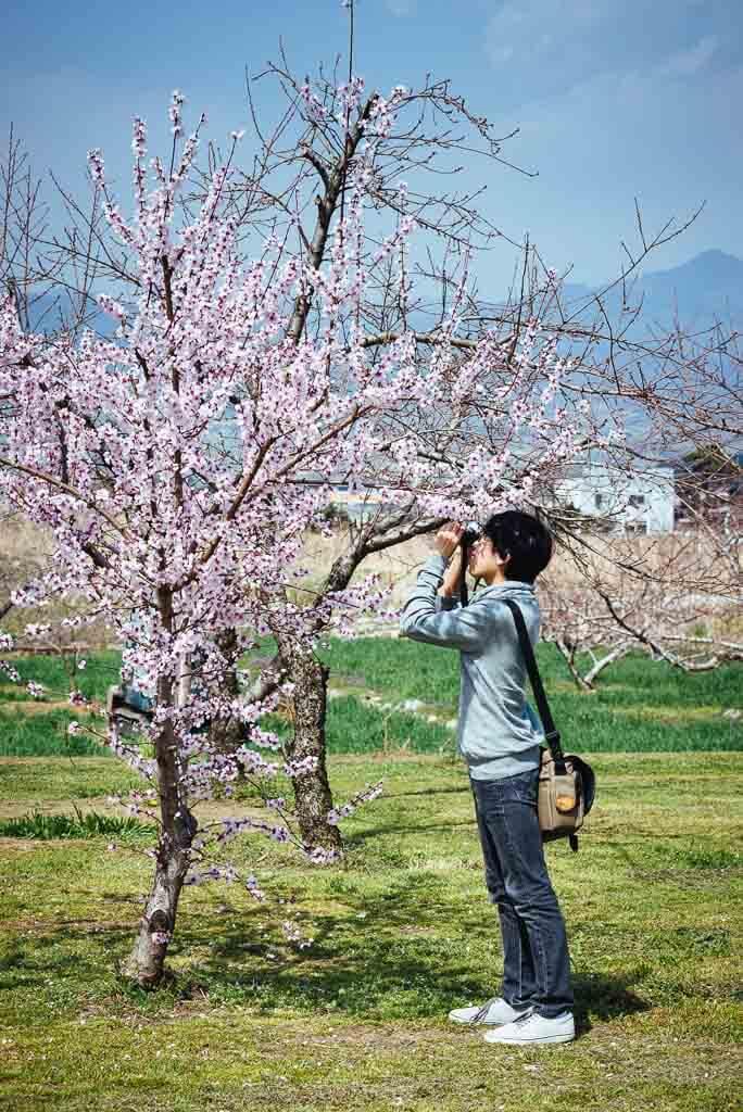 Un jeune homme photographiant les pêchers en fleur