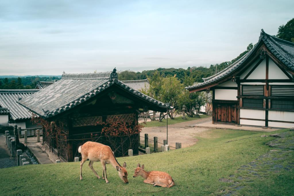 des daims devant les temples japonais du parc de nara