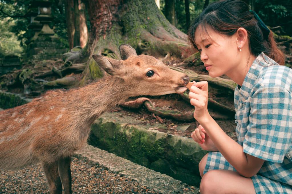 Un daim du parc de Nara mangeant un shika senbei