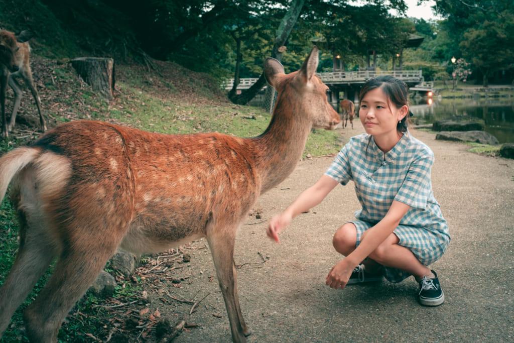 S'approcher des daims shika du Parc de Nara