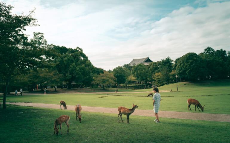 Des daims de tous les côtés dans le Parc de Nara