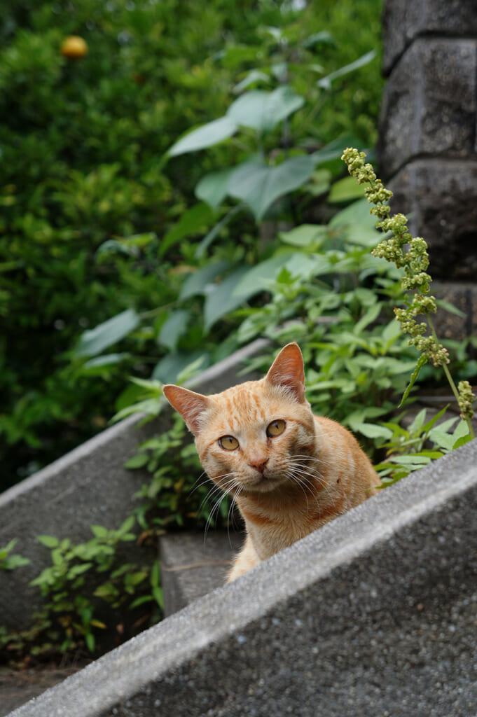 Chat roux au regard inquiet et curieux