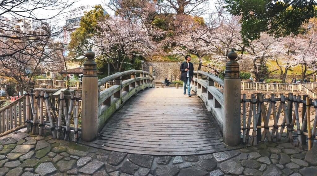 Cerisiers en fleur dans un parc de Tokyo, dans le quartier d'Oji