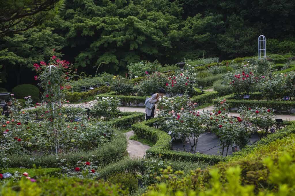 jardin de roses du parc kyu-furukawa à Oji