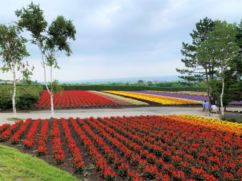 Champ de fleur dans un des parcs nationaux d'hokkaido