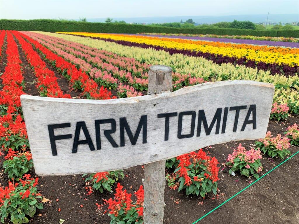 Champ de fleurs d'été à la Farm Tomita de Furano