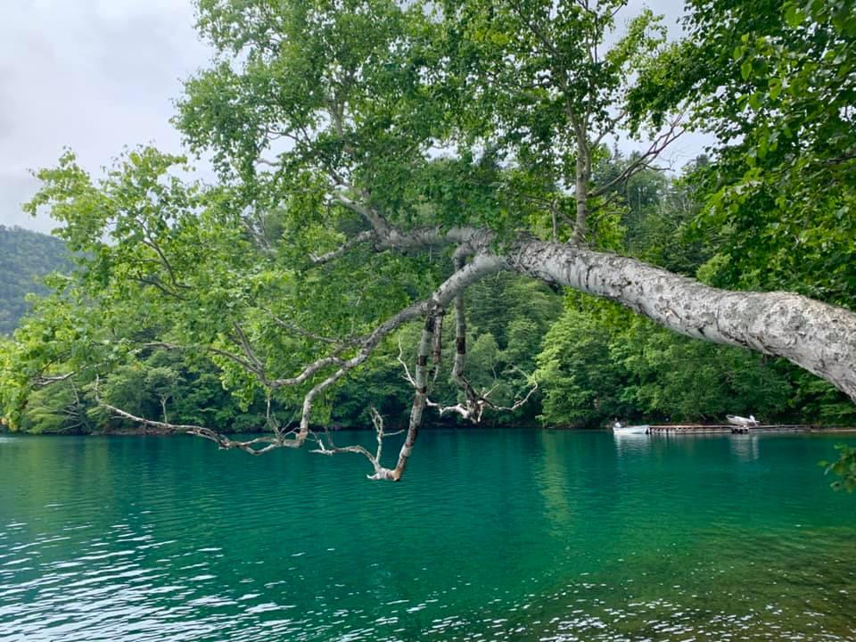 Lac Shikaribetsu et branche d'arbre au-dessus des eaux émeraude