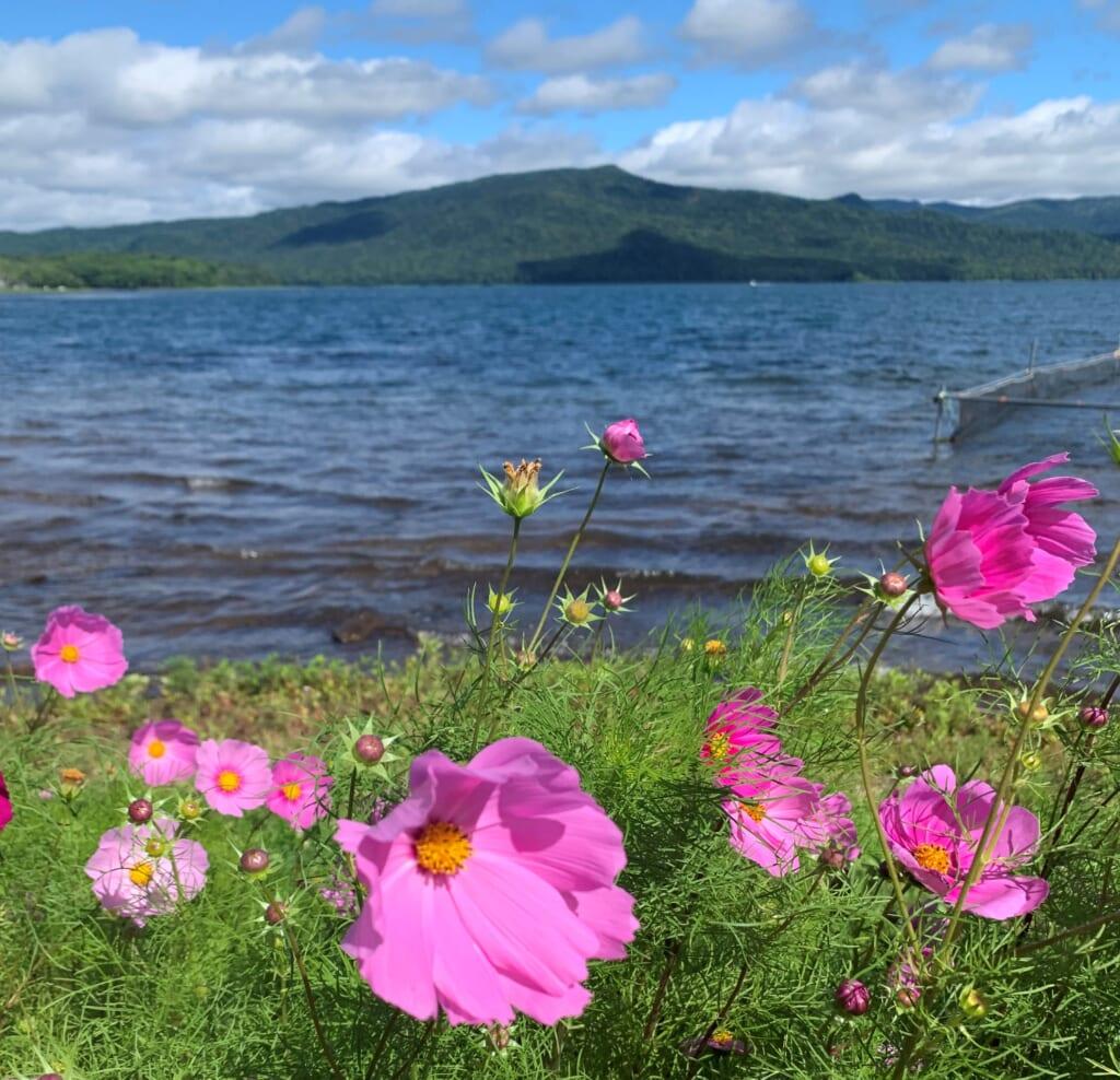 Lac Akan bordé de fleurs, vu depuis Akanko Onsen