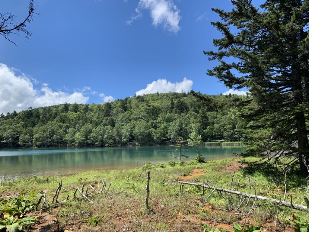 En lisière de forêt, sur les rives du lac Onnetō