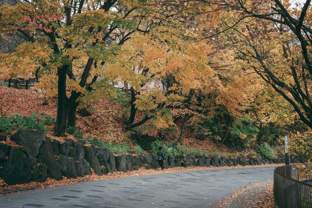 Chemin sous des arbres en automne à jozankei, un village japonais d'Hokkaido